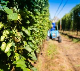 SAB hop farms